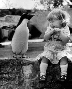 girl meets penguin